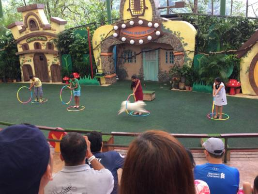 Animal Friends Show