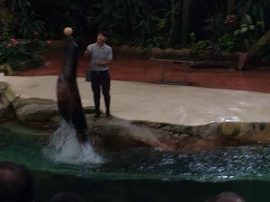 Splash Safari Show