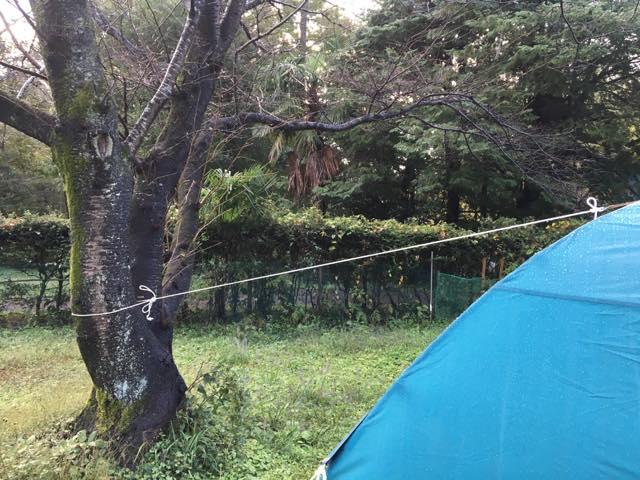 後ろの木にテントとタープをあわせました。
