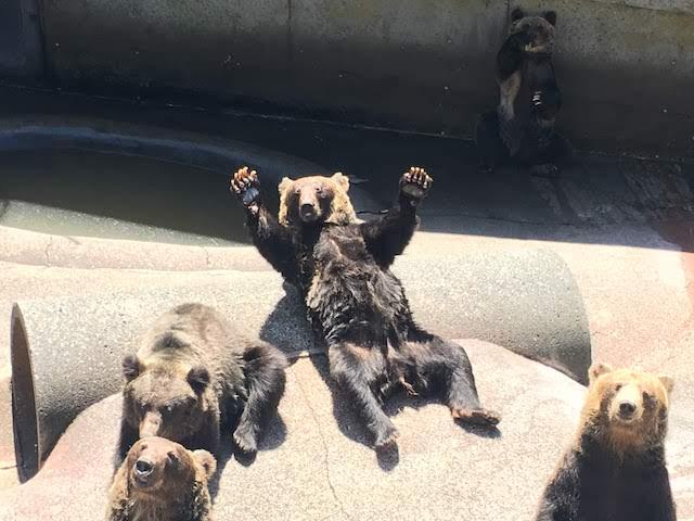 昭和新山熊牧場のクマ