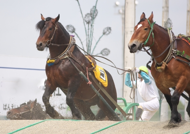 十勝・帯広のばんえい競馬