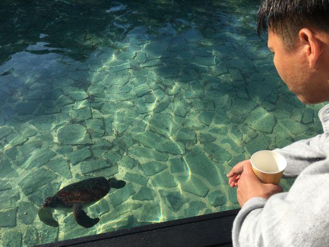 ウミガメに餌やり